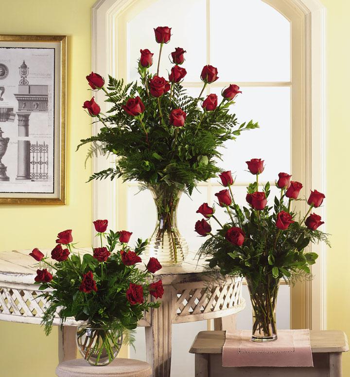 Variety of Rose - Six Rose
